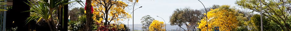 Banner Ipê Amarelo